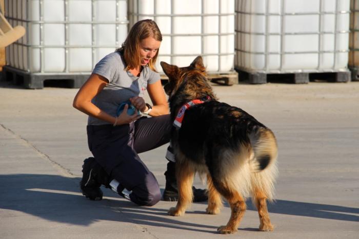 Training der BRK-Rettungshundestaffel Kitzingen